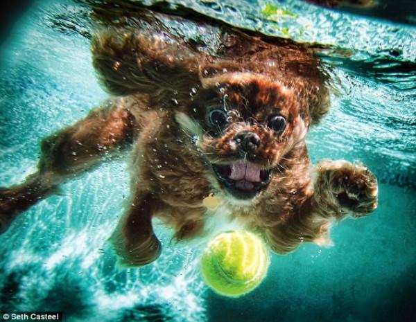 dog-underwater-8