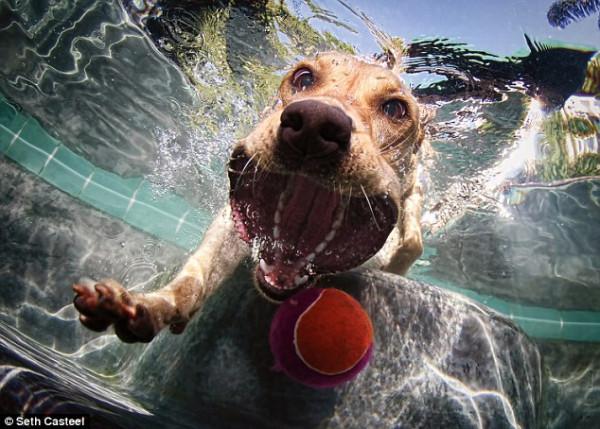 dog-underwater-7