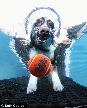 dog-underwater-4