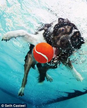 dog-underwater-3