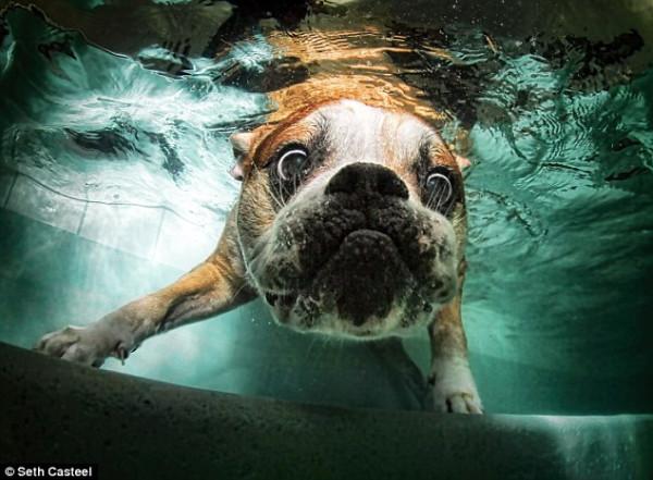 dog-underwater-2!!!