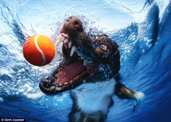 dog-underwater-1