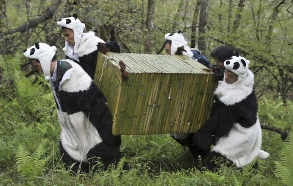panda-0005