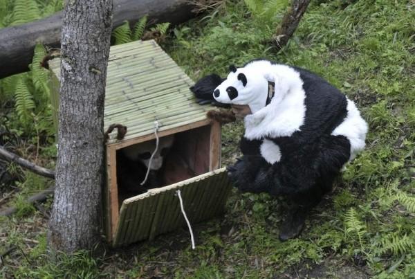 panda-0009