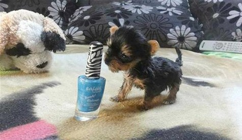small-dog-e1351112702355