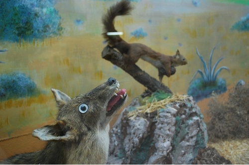 freak-taxidermy12