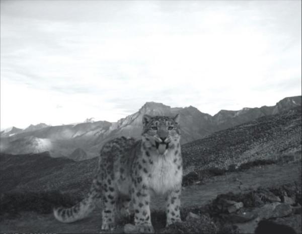 animal-photo-23