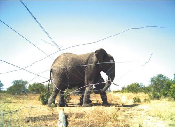 animal-photo-8