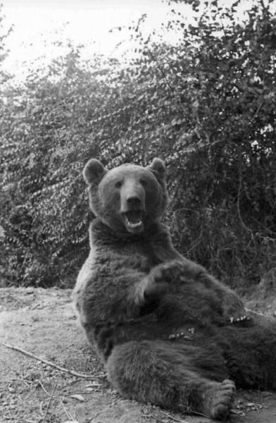 medved-0025