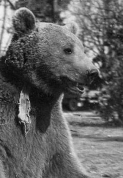medved-0030