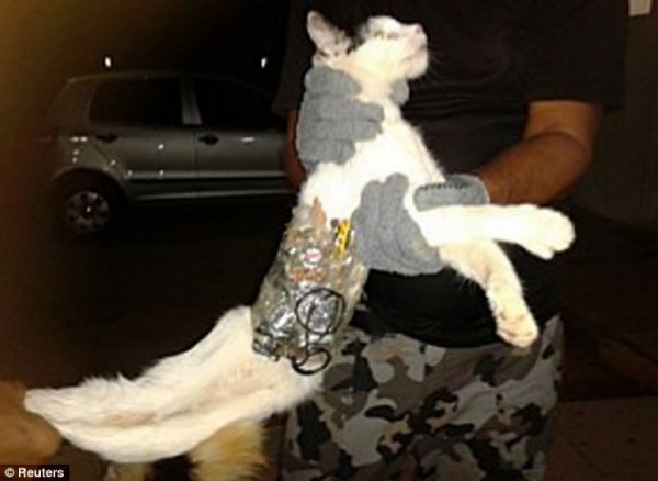 cat-contrabandist-1