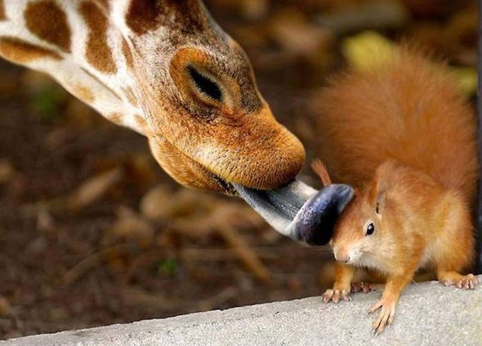 amazing_animal_pictures_21