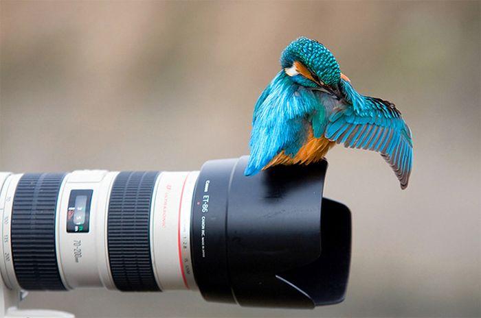 amazing_animal_pictures_22