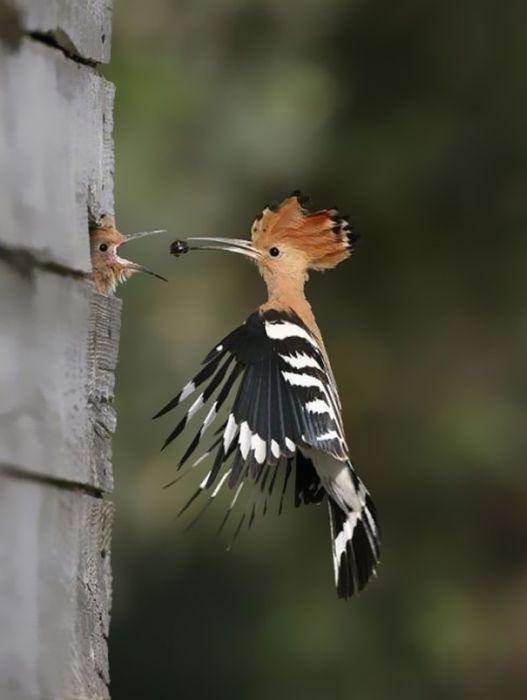 amazing_animal_pictures_31