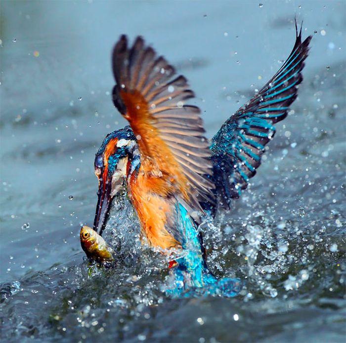 amazing_animal_pictures_41