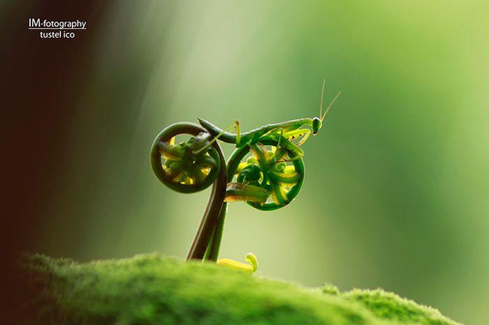 amazing_animal_pictures_42
