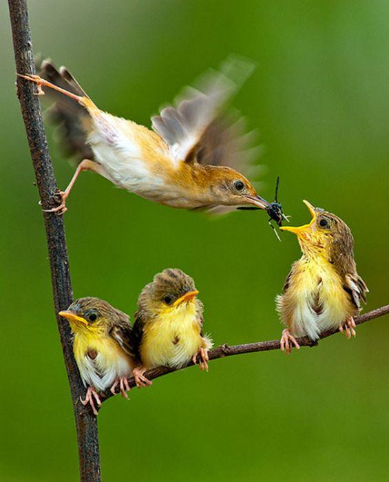 amazing_animal_pictures_47