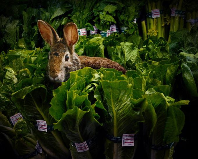Garden-Fresh-by-Agan-Harahap_3