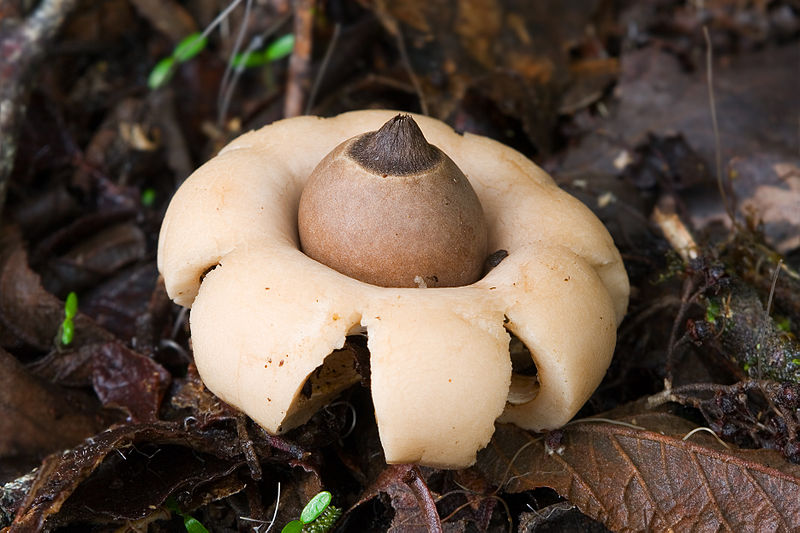 Fungi06