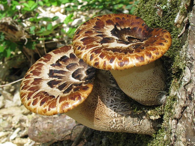Fungi07