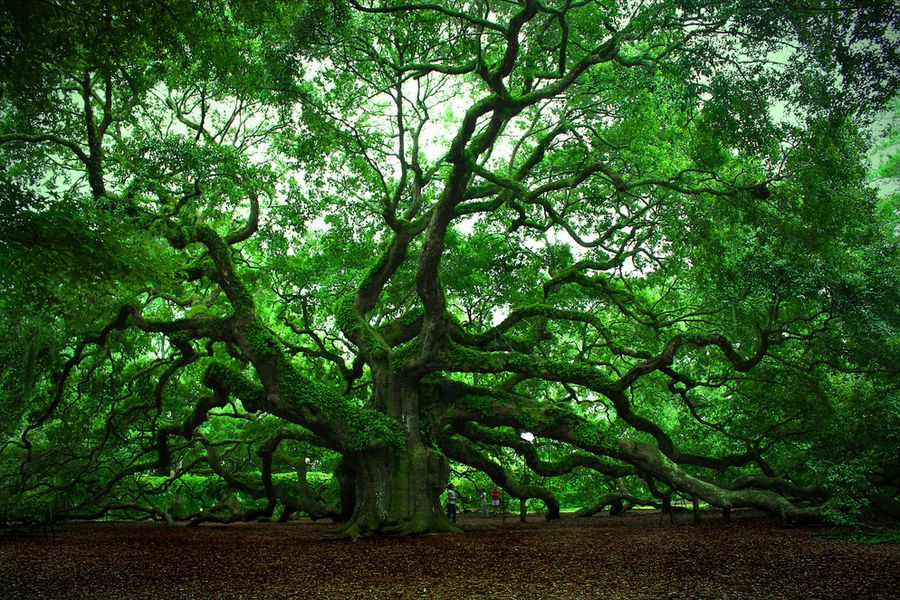 trees01