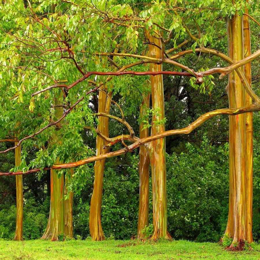 trees05