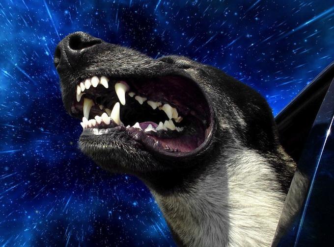 warpdogs1