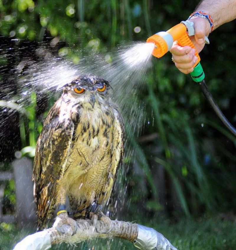 owls02