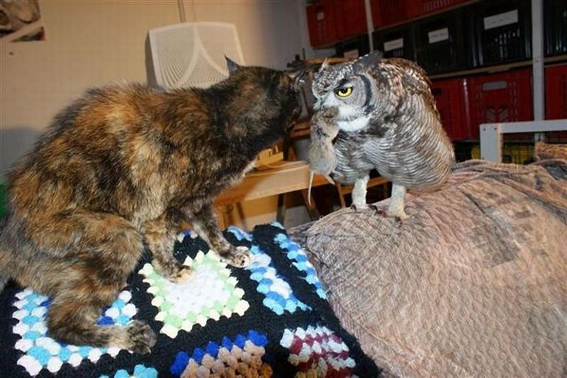 owls04