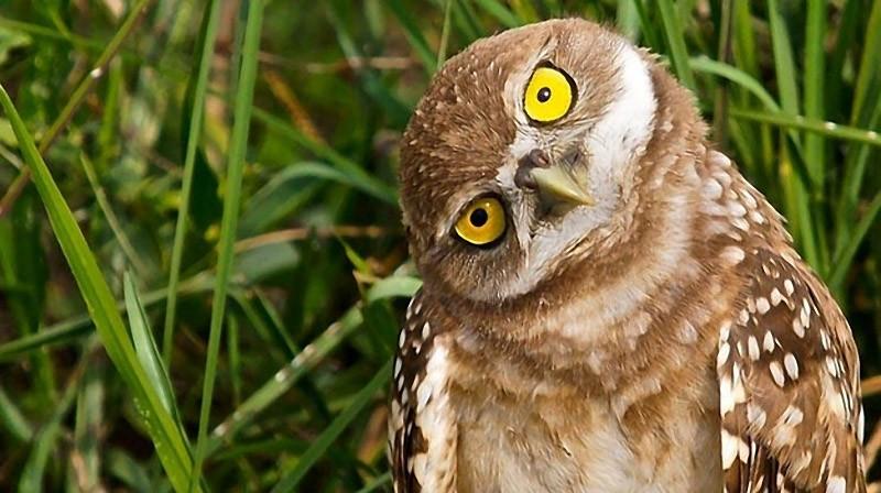 owls21