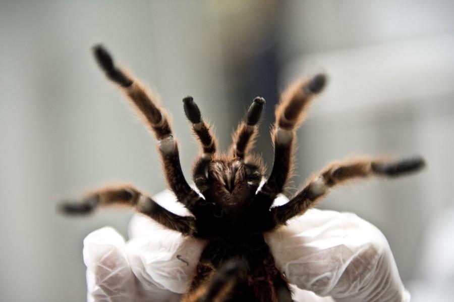 spiderfarm03