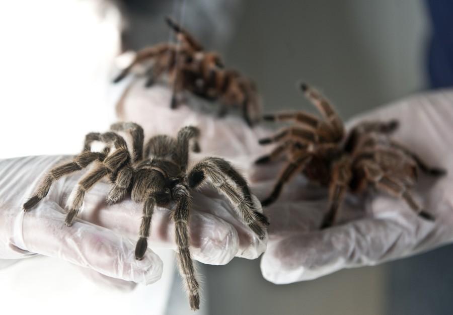 spiderfarm04
