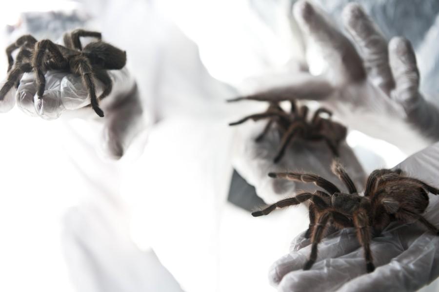 spiderfarm05