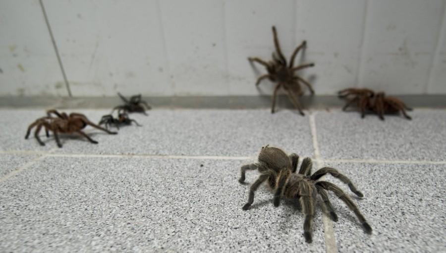 spiderfarm06