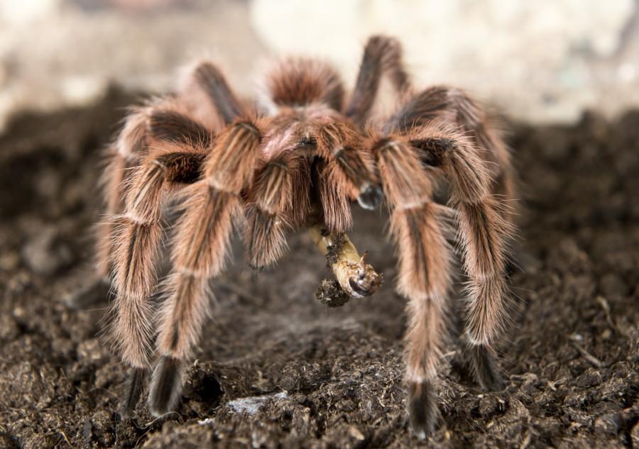 spiderfarm07