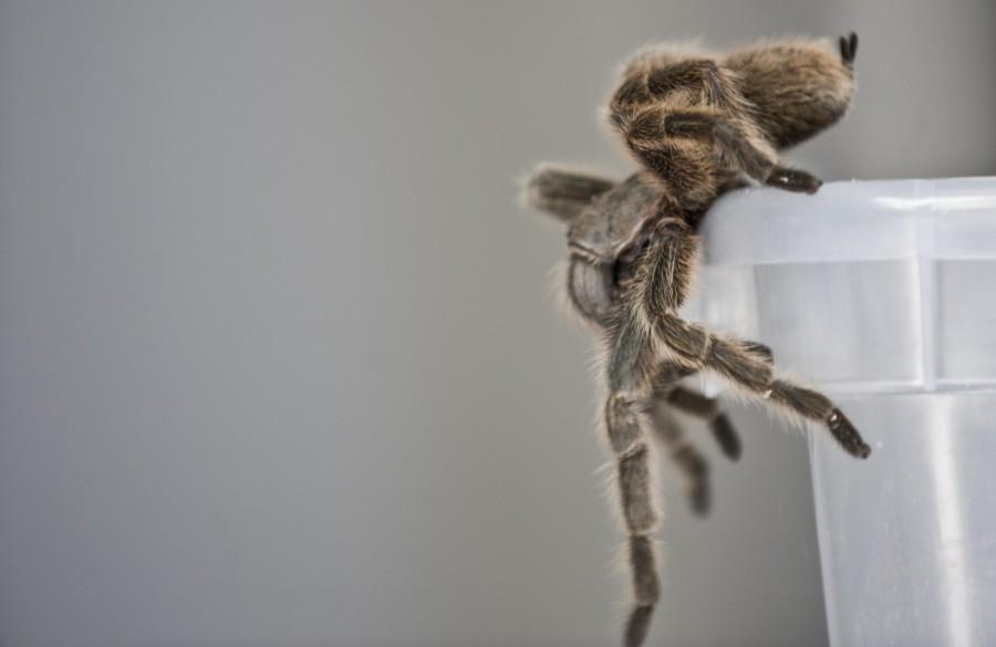 spiderfarm08