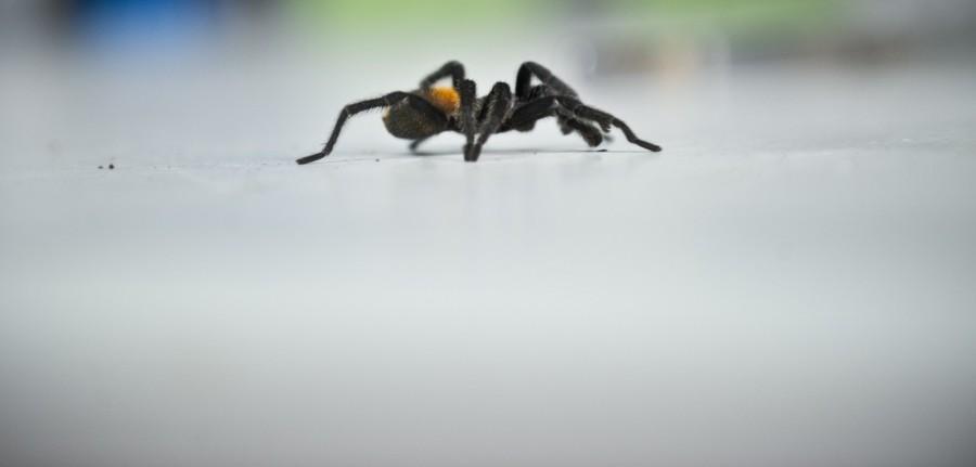 spiderfarm09