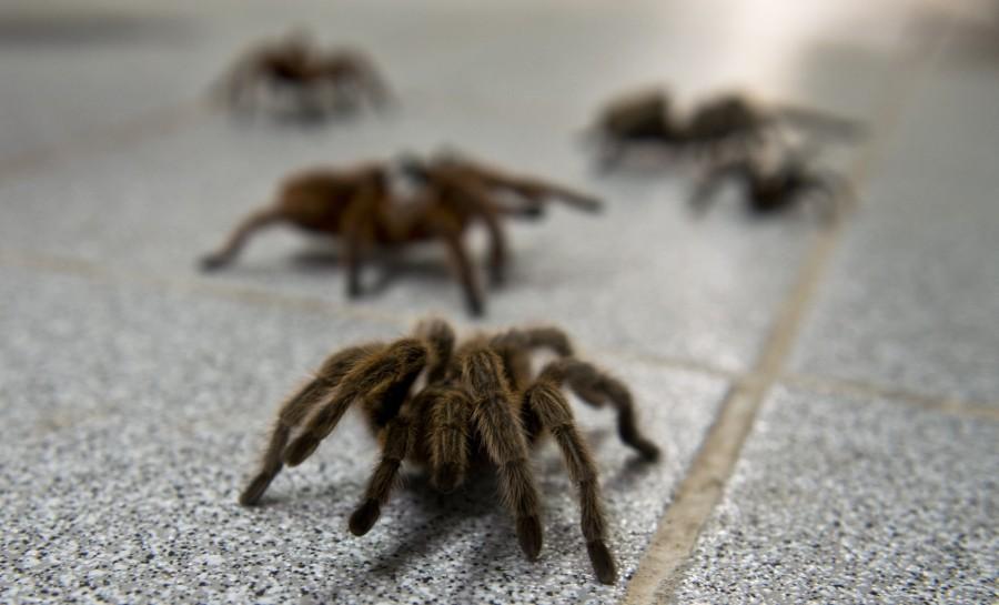 spiderfarm10