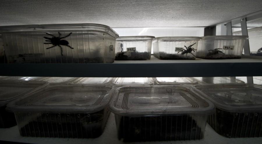 spiderfarm11