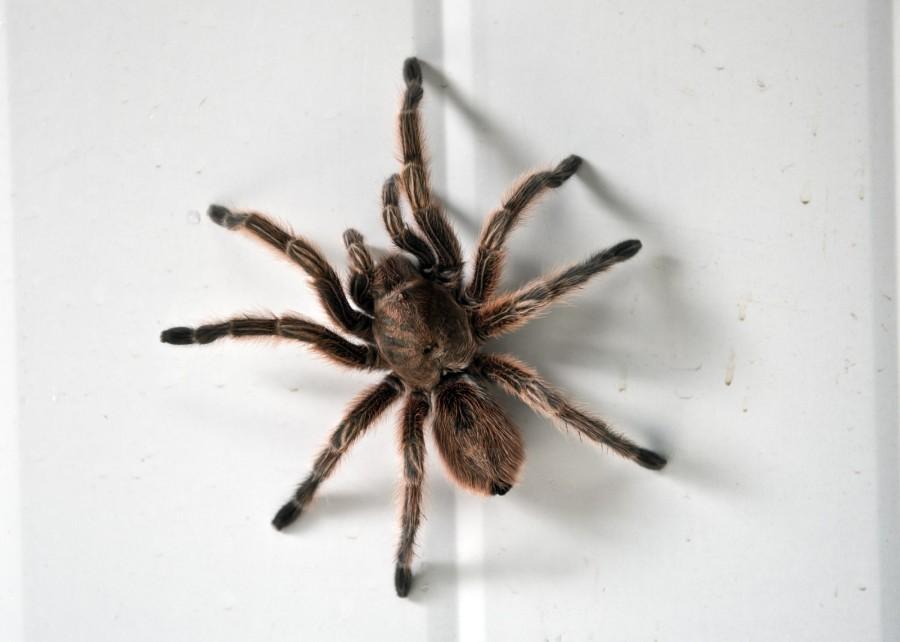 spiderfarm15