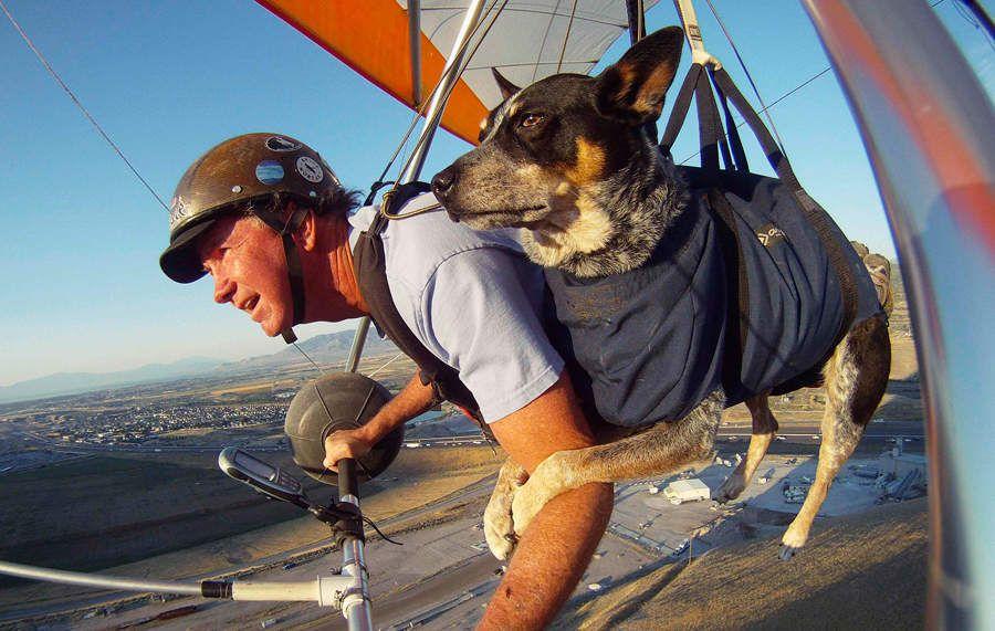 flyingdog01