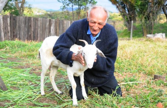 man-marries-goat-550x357