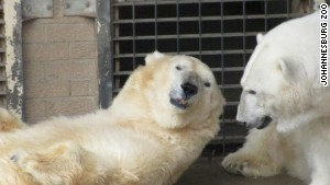 polar-bear-wang-vday-story-top-2