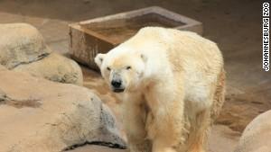 polar-bear-wang-story-body-3