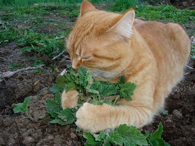 cat-weed-4