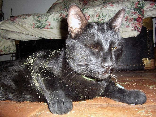 cat-weed-6