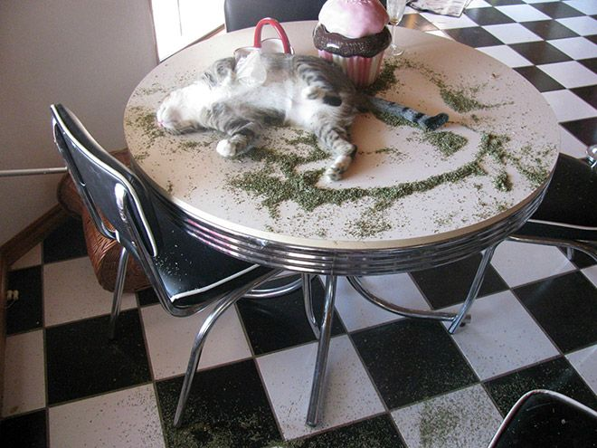 cat-weed-15