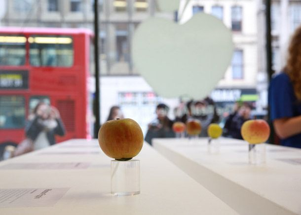 яблоки2