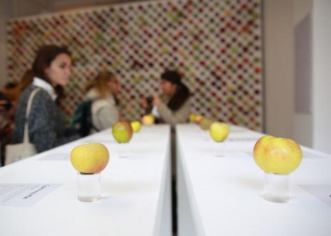 яблоки4