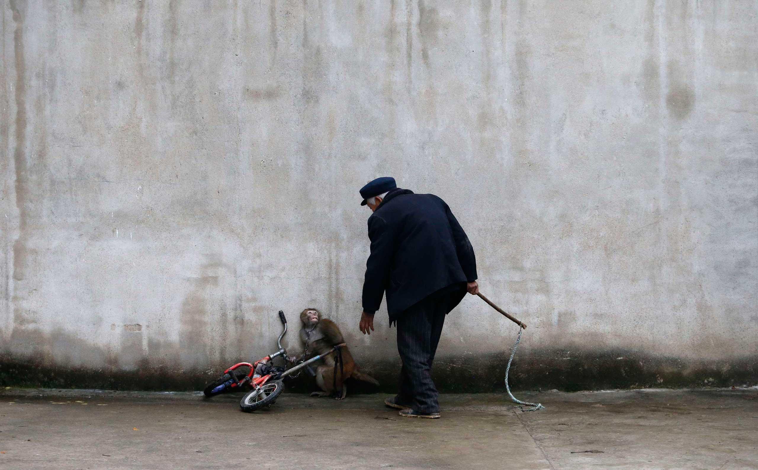 photo-day-china-monkey-cirkuis
